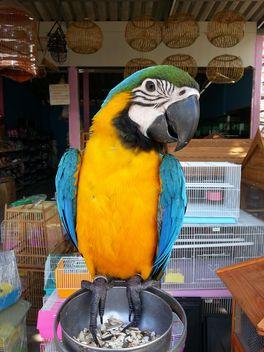 Ara parrot - image gratuit #200323