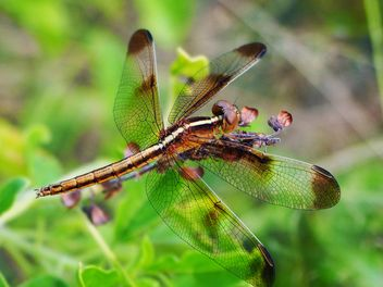 Dragonfly on the herb - image #201503 gratis