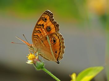 Orange butterfly - Free image #201563
