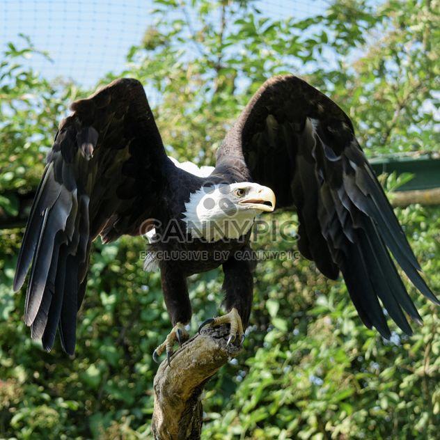Portrait de l'aigle - Free image #201633