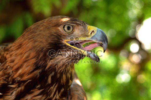 Retrato de primer plano del águila - image #201653 gratis
