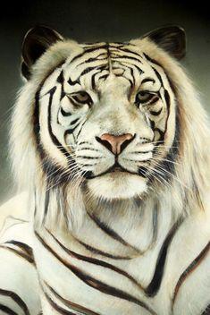 White tiger - бесплатный image #201673