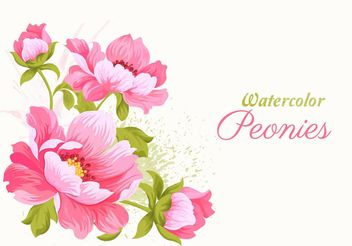 Pink Watercolor Peonies Vector Illustration - Free vector #205183