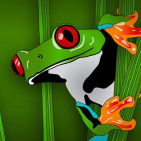 Green Jungle Frog - Free vector #209963