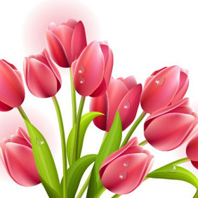 Red Tulips Vector - Free vector #211133