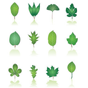 12 Green Leaf Collection - vector gratuit #214333