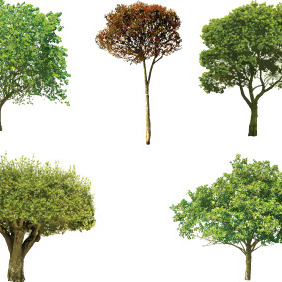 Detailed Vector Trees - vector gratuit #216053