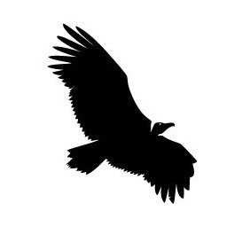 Vulture Vector Image - Free vector #219353