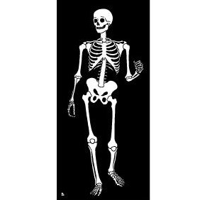 Skeleton Vector Image - бесплатный vector #219363