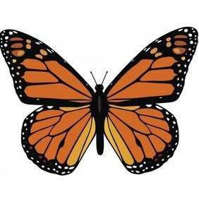Monarch Butterfly - vector gratuit #222753