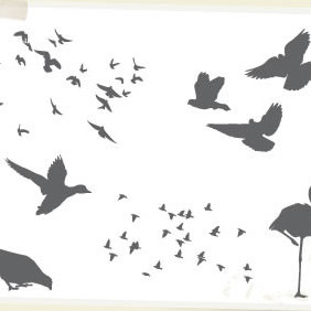 Birds - vector gratuit #223563