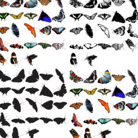 93 Butterflies - Free vector #223703