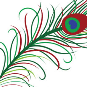 Peacock Feather Vector - Free vector #223943