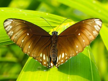 Butterfly close-up - Free image #225363