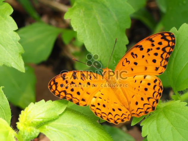 Butterfly close-up - Free image #225383