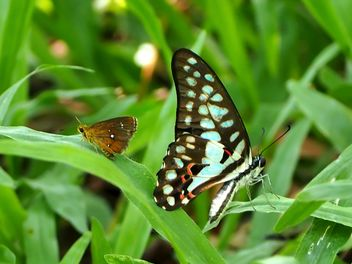 Butterfly close-up - Free image #225403