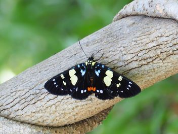 Butterfly close-up - Free image #225423