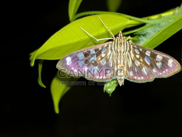 Close-up de mariposa - image #225453 gratis