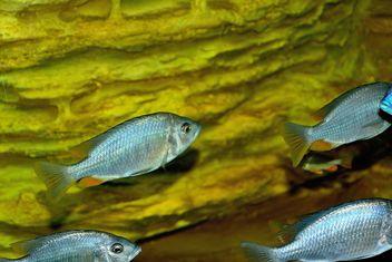 Aquarium - image #229403 gratis