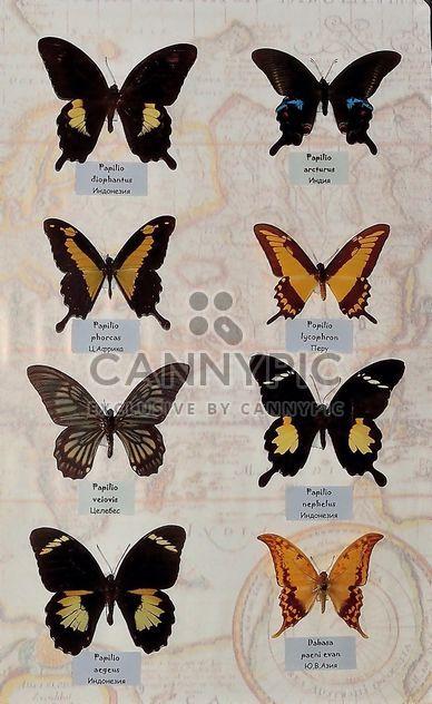 Коллекция бабочек - бесплатный image #229463