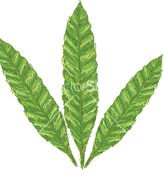 Free unique style of fern leaves scientific name vector - Free vector #233523