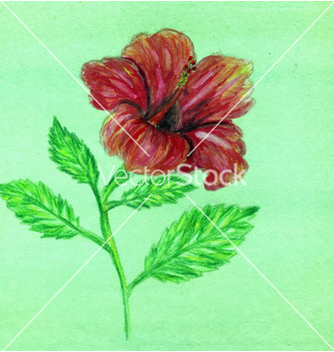 Free painted hibiscus2 vector - бесплатный vector #234123