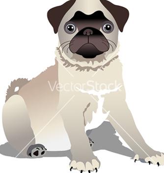 Free pug puppy vector - vector gratuit #242703