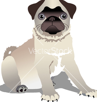 Free pug puppy vector - Free vector #242703
