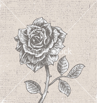 Free rose with vintage background vector - Free vector #255653