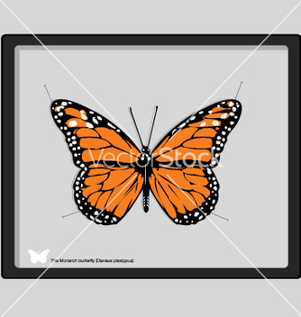 Free monarch butterfly vector - vector gratuit #271173