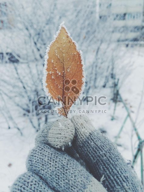winterart, winterartua, winter, leaf, winterua - Free image #271763