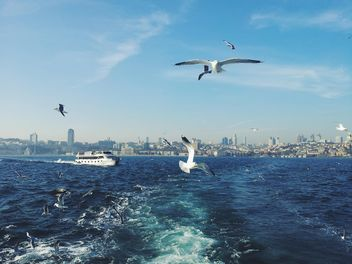 seagulls flying and boat at sea - бесплатный image #272313