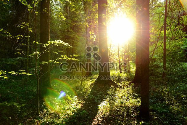 golden sunset in the forest - Free image #272513