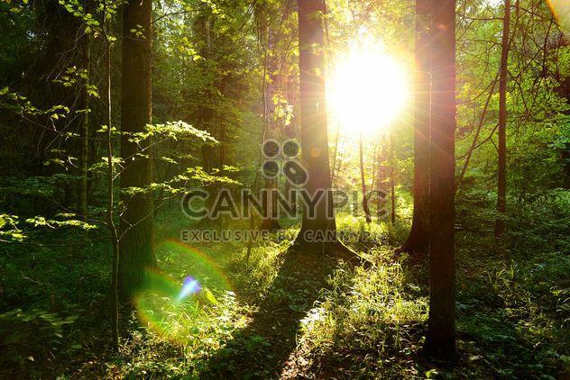 dorado atardecer en el bosque - image #272513 gratis