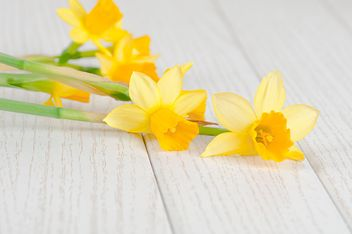 Daffodils on white wooden background - бесплатный image #272573