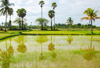 Rice fields - image #272933 gratis
