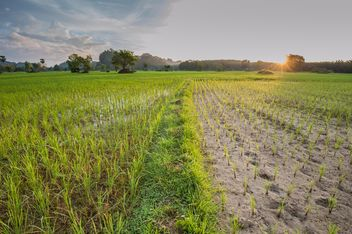 Rice fields - image #272963 gratis