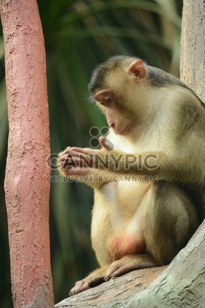 Affen im zoo - Kostenloses image #273043