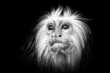 monkey in the zoo - image gratuit #273103