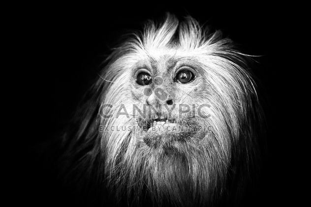 mono en el zoológico - image #273103 gratis
