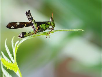 Grasshopper - image gratuit #273123