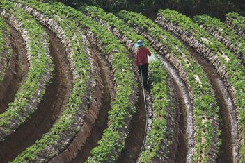 strawberry fields - image #273803 gratis