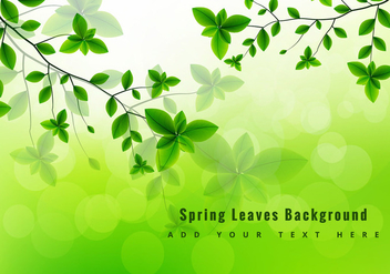 Green spring leaves - vector gratuit #274073