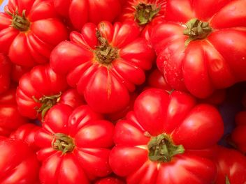 Bunch of tomatoes - image gratuit #274843