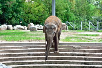 Elephant in the Zoo - image gratuit(e) #274913