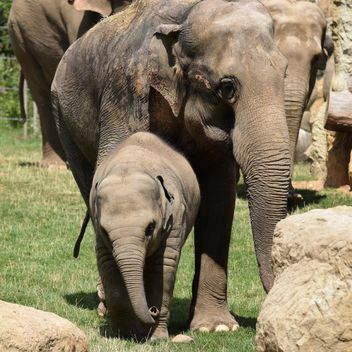 Elephants in the Zoo - Free image #274943