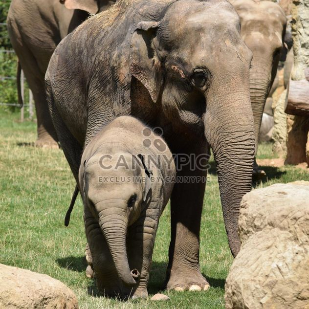 Elefanten im Zoo - Kostenloses image #274943