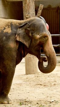 Elephant in the Zoo - image gratuit(e) #274953