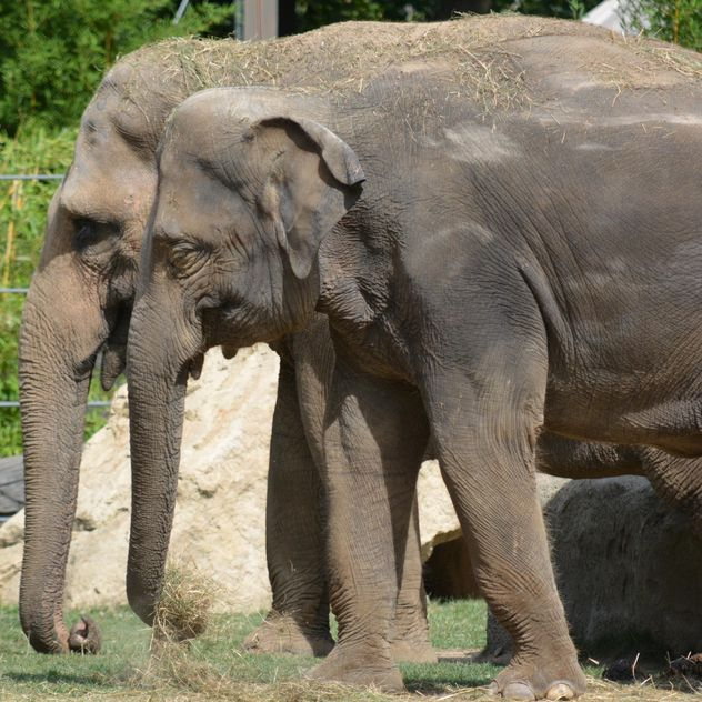 Elephants in the Zoo - Free image #274973
