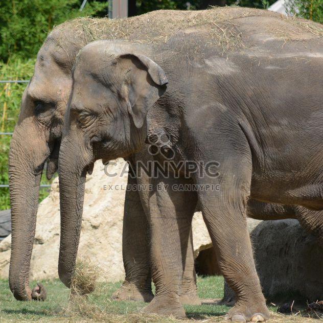 Elefanten im Zoo - Kostenloses image #274973